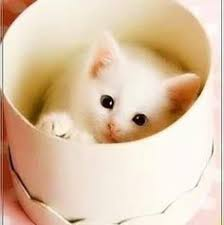 cute animals profile pictures for whatsapp