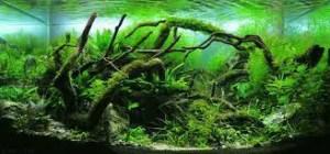 Java moss tree