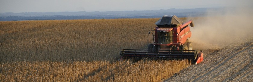 Compositional differences in soybeans on the market: Glyphosate accumulates in Roundup Ready GM soybeans | myfoodistry