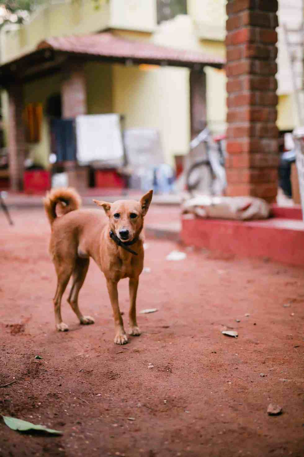 The dogs who've adopted us