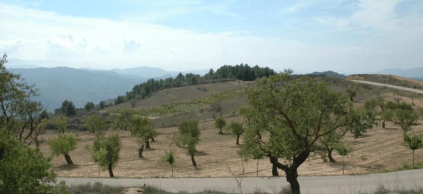 Испания, оливковые рощи