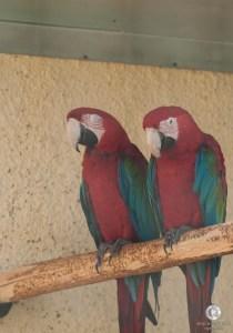 Красавцы-ара
