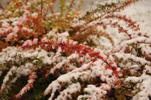 Цветы в Петровском