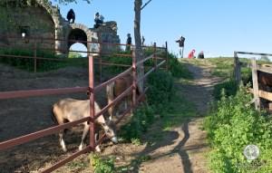 Остатки Кремля и лошадки
