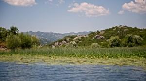 Природа Скадарского озера