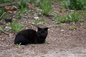 Кошка настоящая, обыкновенная