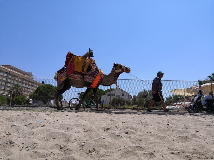 Camel on the Long Beach - Kusadasi