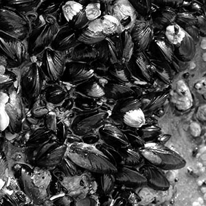 Mussels detail
