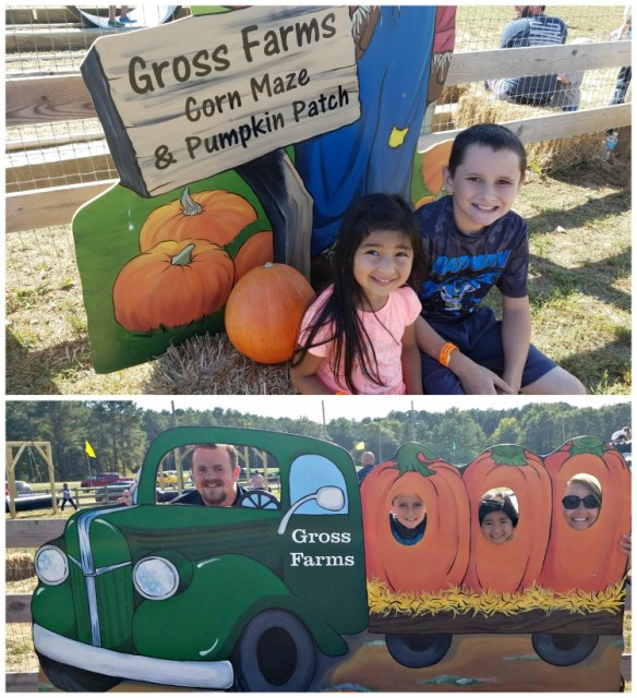 North Carolina Pumpkin Patch