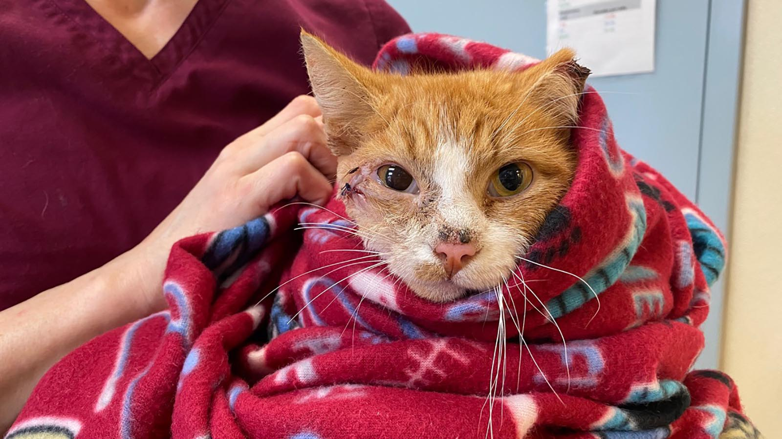 An orange tabby cat got a new lease on life and a name to go with it after veterinarians removed an arrow that someone had shot through his head.