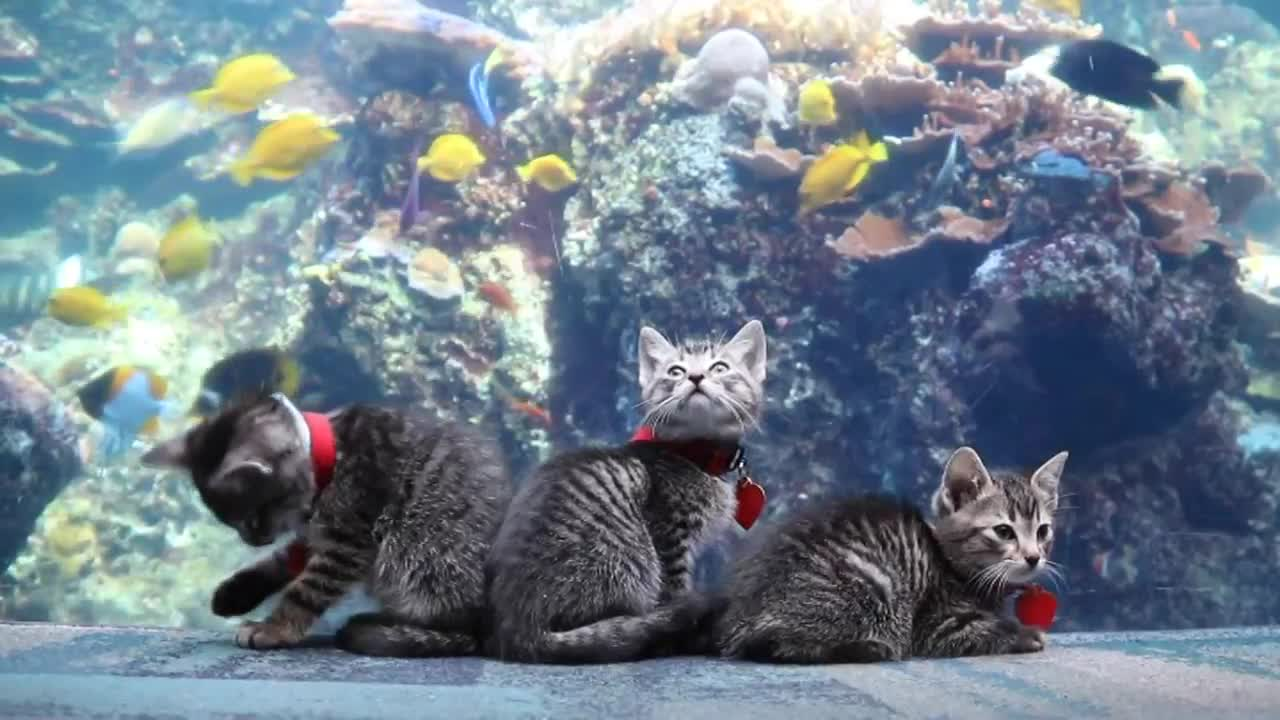Kittens take over aquarium closed to humans during coronavorus pandemic