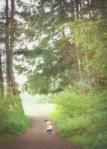 woods 06