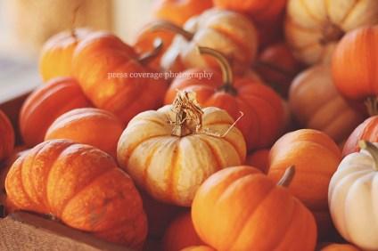 fall fun 14