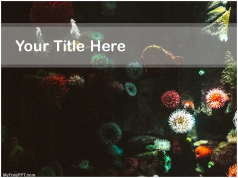 Free Anemone PPT Template