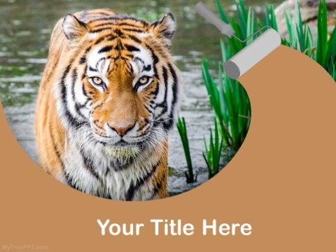Free Bengal Tiger PPT Template
