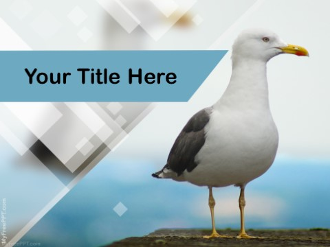 Free Bird Photography PPT Template