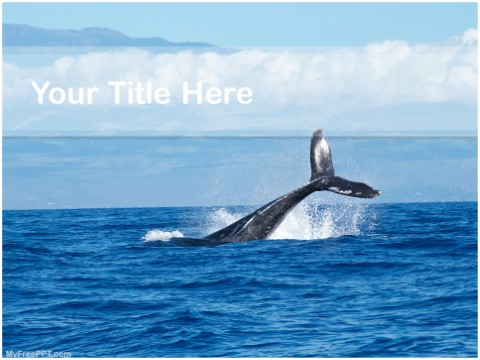 Free Black Whale PPT Template