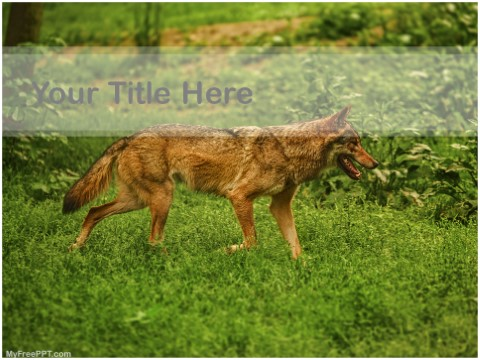 Free Brown Wolf PPT Template