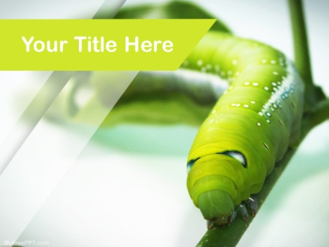 Free Caterpillar PPT Template