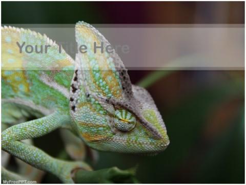 Free Chamaeleonidae PPT Template