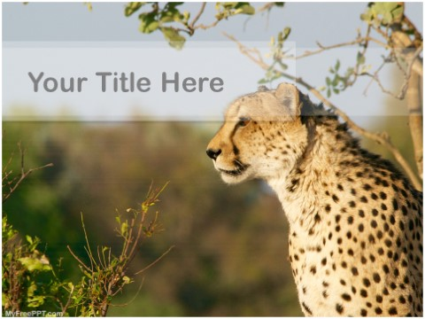 Free Cheetah PPT Template