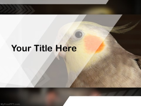 Free Cockatiels PPT Template