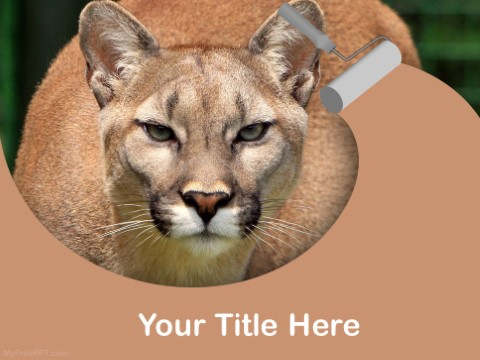 Free Cougar PPT Template