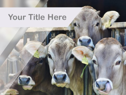 Free Dairy Farm PPT Template