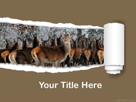 Free Deer PPT Template