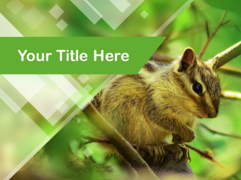 Free Diurnal Animals PPT Template