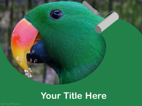 Free Eclectus PPT Template