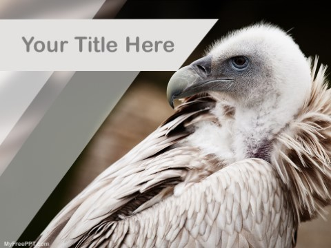 Free Endangered Vulture PPT Template
