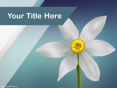 Free Flower Photography PPT Template