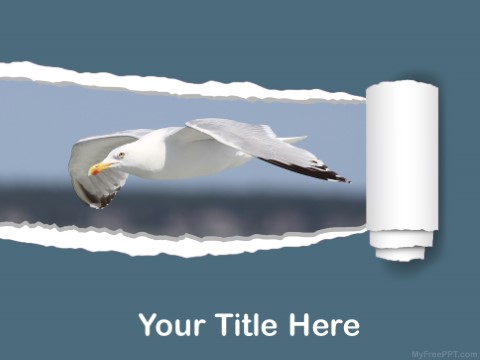 Free Flying Bird PPT Template