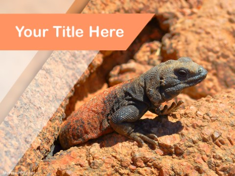 Free Gecko PPT Template