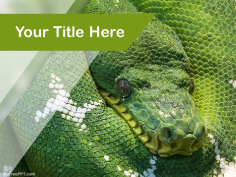 Free Green Snake PPT Template