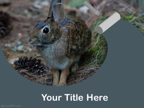 Free Hare PPT Template