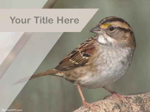 Free Indian Sparrow PPT Template