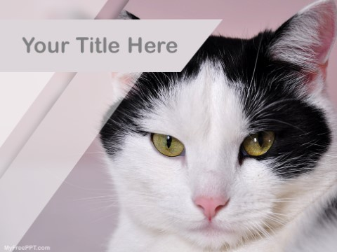 Free Kitty PPT Template