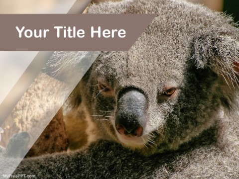 Free Koala Bear PPT Template
