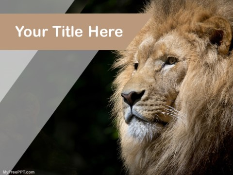 Free Lion PPT Template