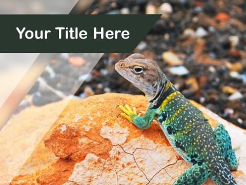 Free Lizard PPT Template