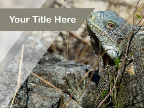Free Lizard PPT Template