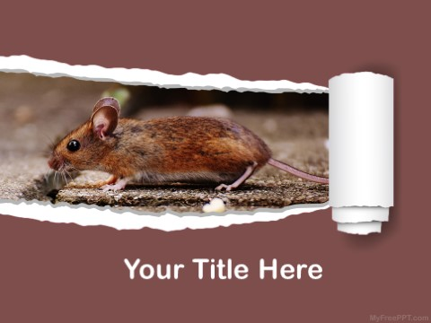 Free Mice PPT Template