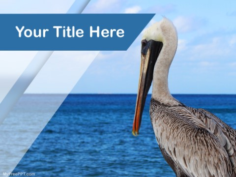 Free Pelican PPT Template