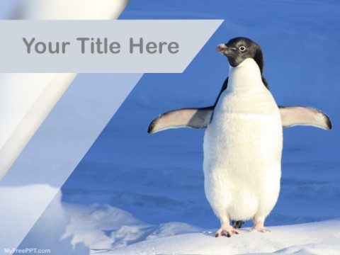 Free Penguin PPT Template