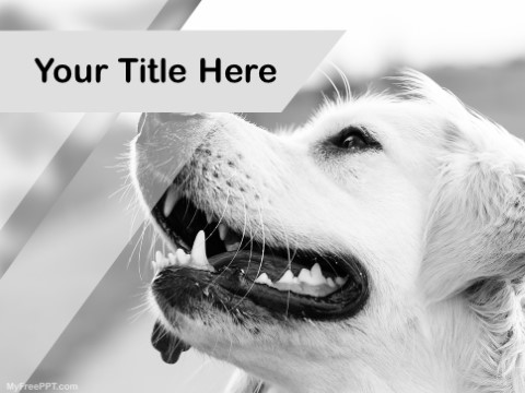 Free Pet Photography PPT Template