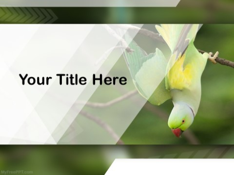Free Psittacines PPT Template