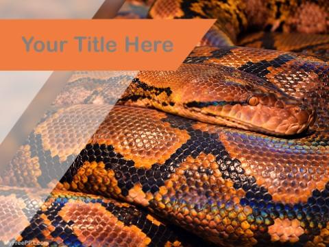 Free Python PPT Template