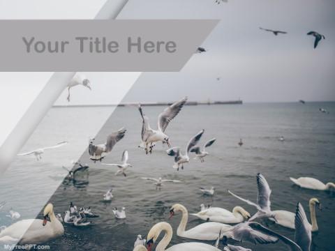 Free Seabirds PPT Template